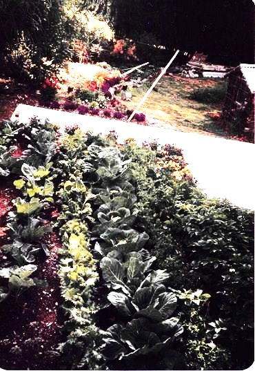 Vegetables Garden next to residential home in New Zealand