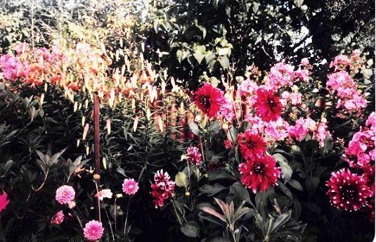 Garden of beautiful flowers
