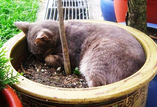 adorable cat sleeping at flower pot